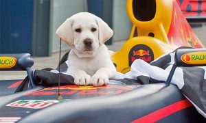 Red Bull Racing top dog